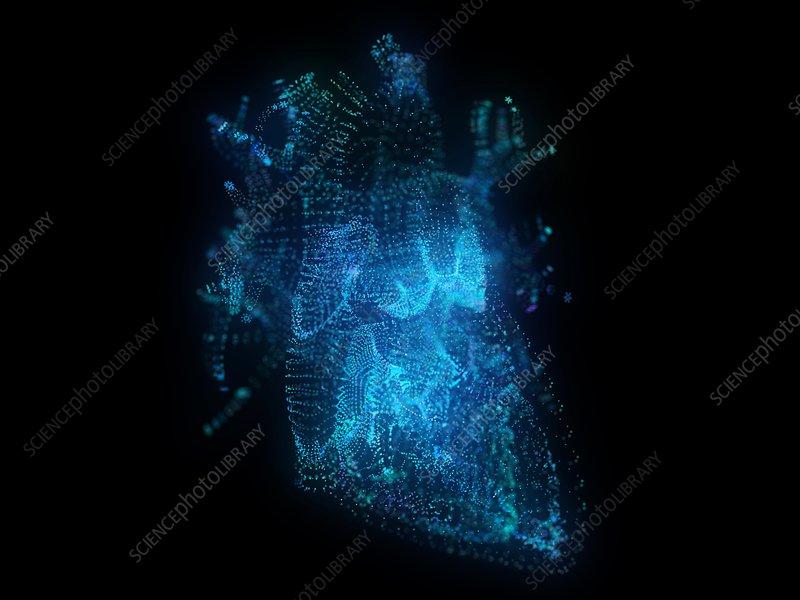Illustration of a plexus heart