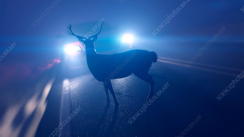 Illustration of a deer in front of a car