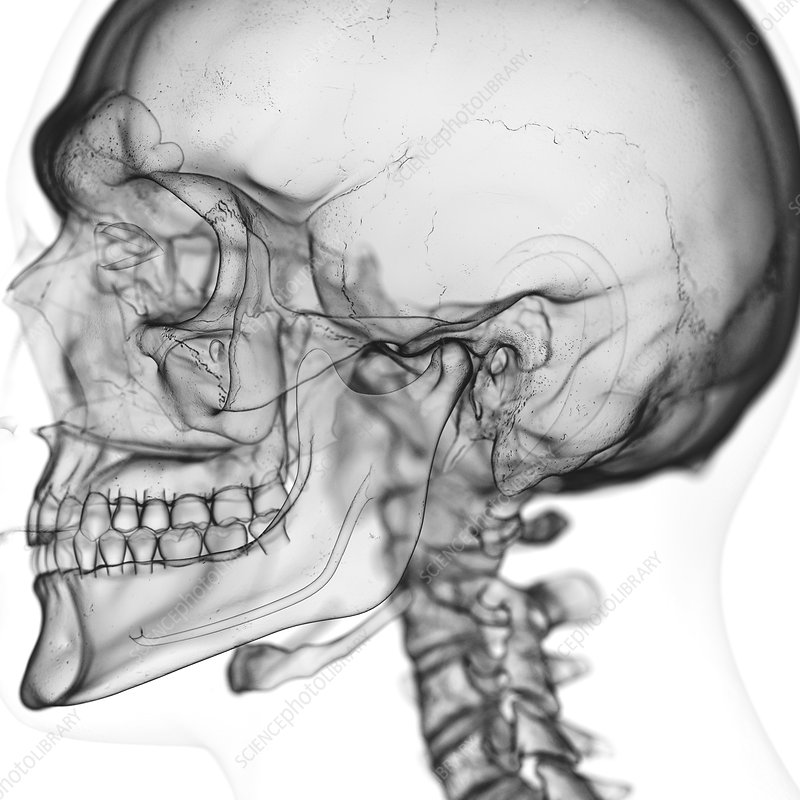 Illustration of the temporomandibular joint