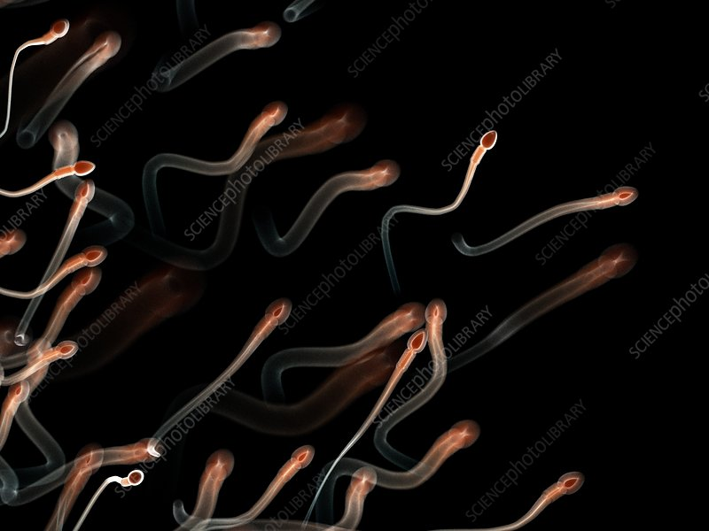 Illustration of human sperm