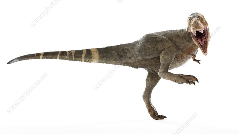 Illustration of a T-rex