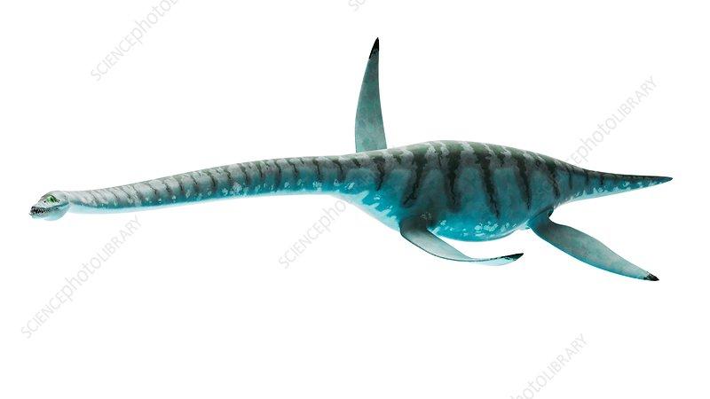 Illustration of styxosaurus