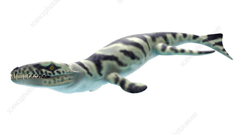 Illustration of a dakosaurus