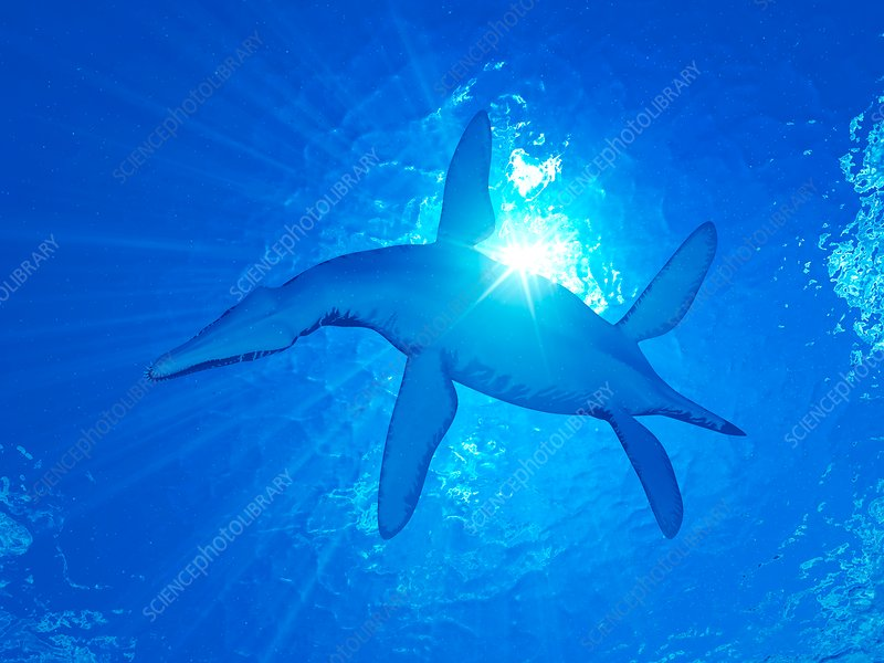 Illustration of a Liopleurodon
