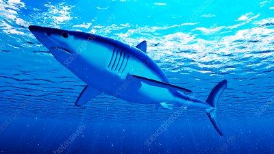 Illustration of a mako shark