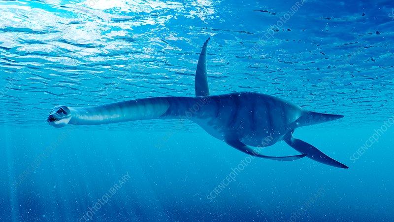 Illustration of a styxosaurus