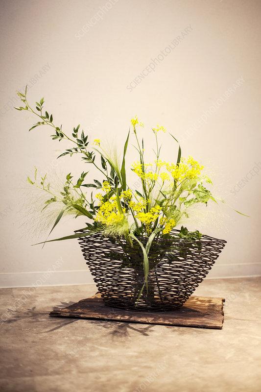 Ikebana arrangement with yellow flowers in brown basket