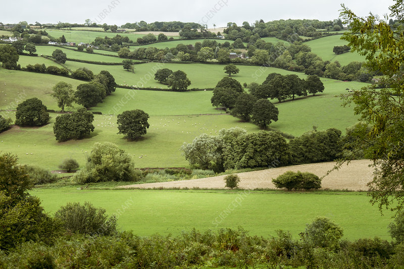 Farmed landscape valleys and hills green with crops