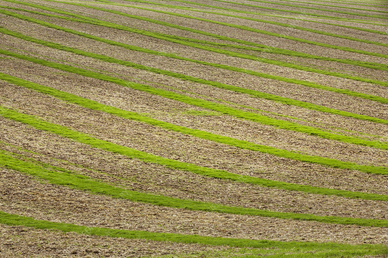 Farmland landscape in August, ploughed fields and crops