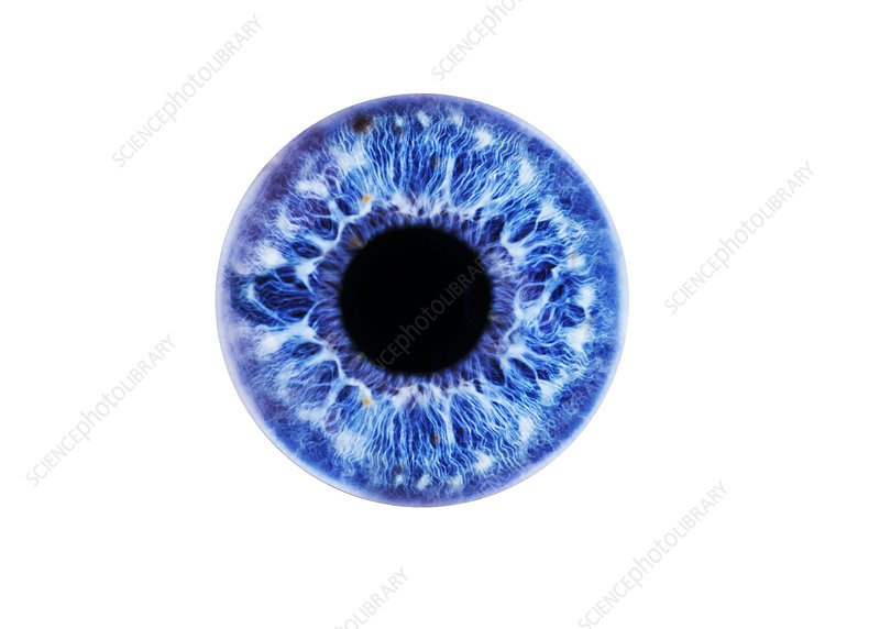 Human eye showing close-up of blue iris and pupil