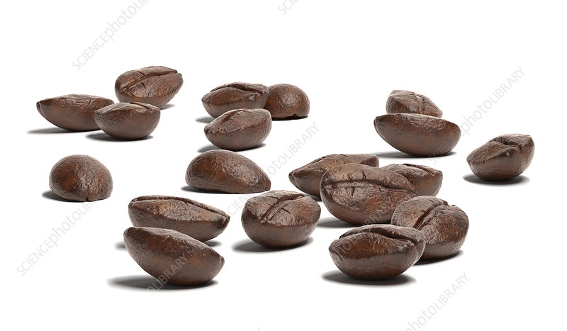 Group of coffee beans on white surface, illustration