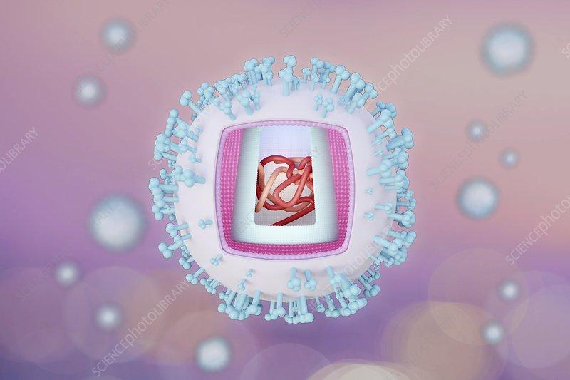 HIV, illustration