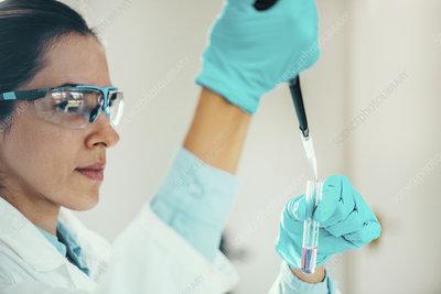 Scientist pipetting sample