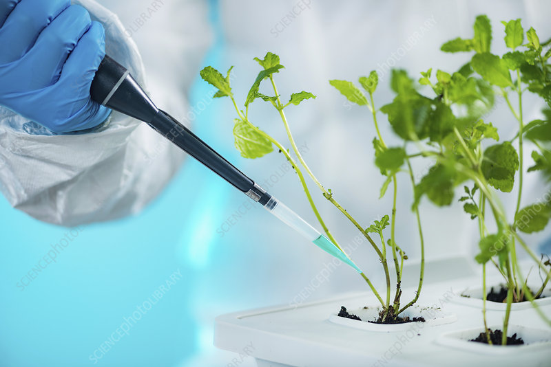 Biologist working with seedlings in plant laboratory