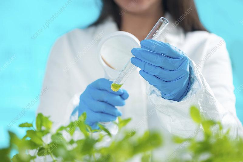 Botanist examining plant samples