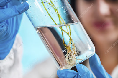 Botanist examining plant specimen