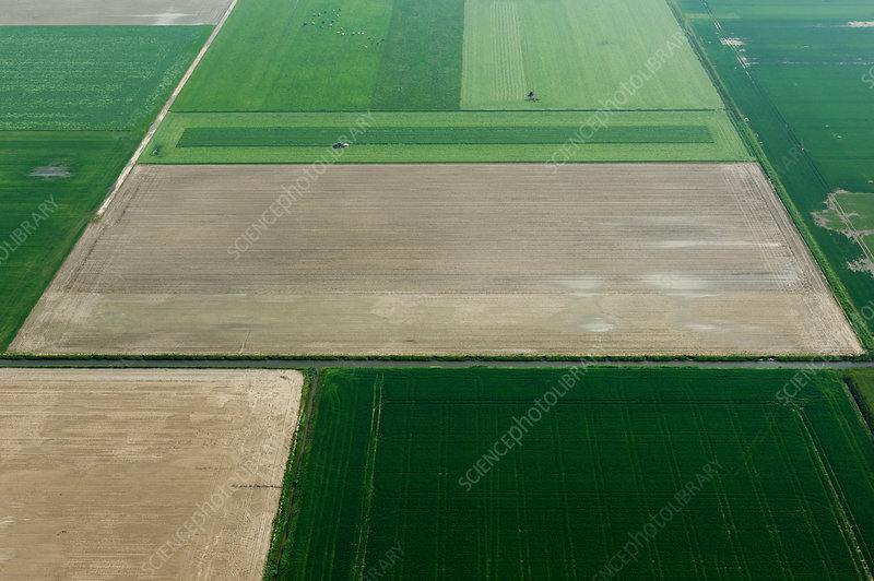 Fields and country roads in spring, Netherlands