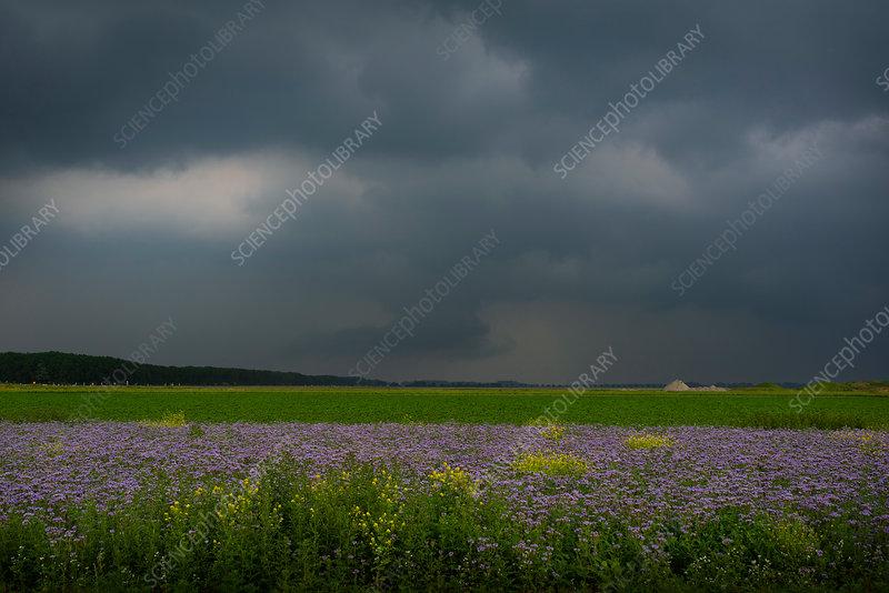 Thunderstorm over field, Netherlands
