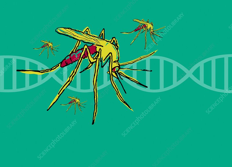 DNA and mosquito, illustration