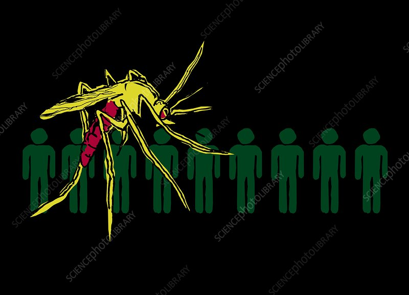 People and mosquito, illustration