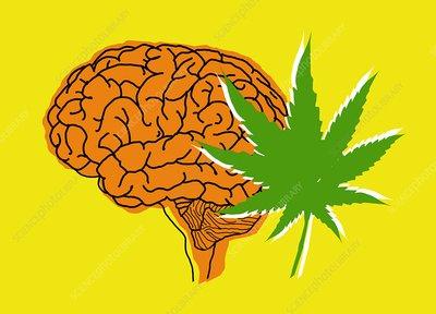 Brain and cannabis, illustration