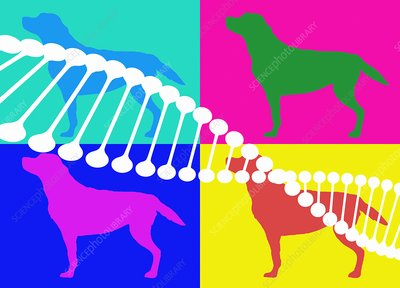 DNA and dogs, illustration