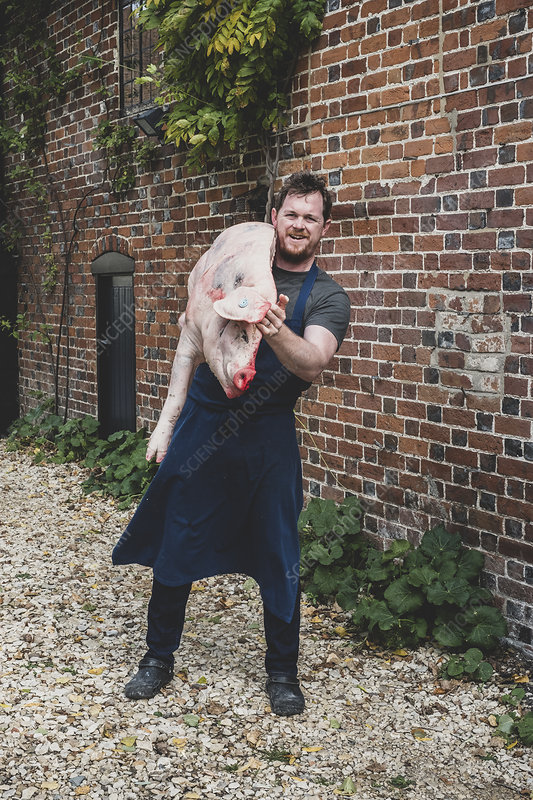 Male butcher wearing apron carrying half a pig's carcass
