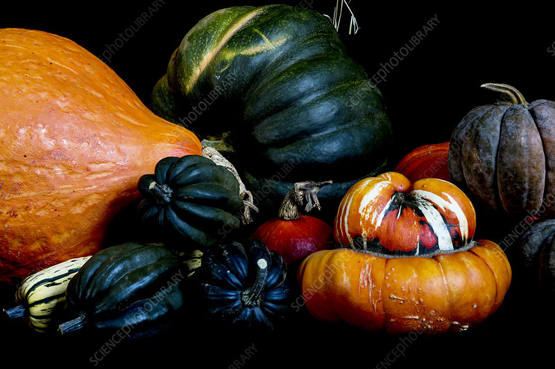 Close up, variety of just picked pumpkins, black background