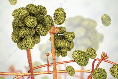Stachybotrys toxic mould, illustration