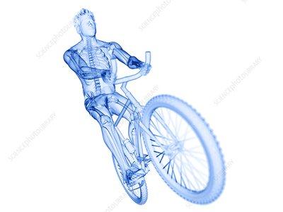 Cyclist, illustration