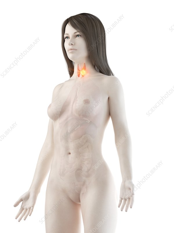 Thyroid cancer, conceptual computer illustration