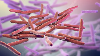 Leprosy bacteria, illustration