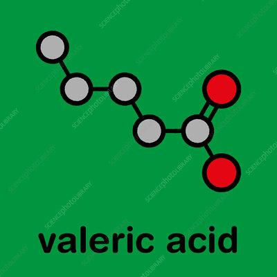 Valeric acid molecule, illustration