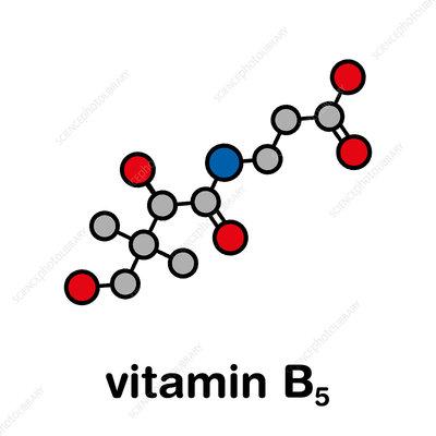 Vitamin B5 molecule, illustration