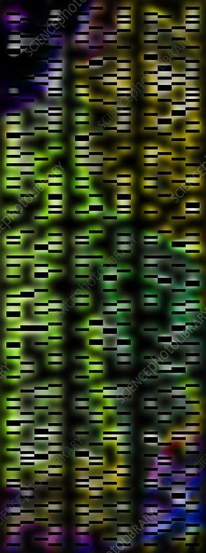 DNA autoradiograph, illustration