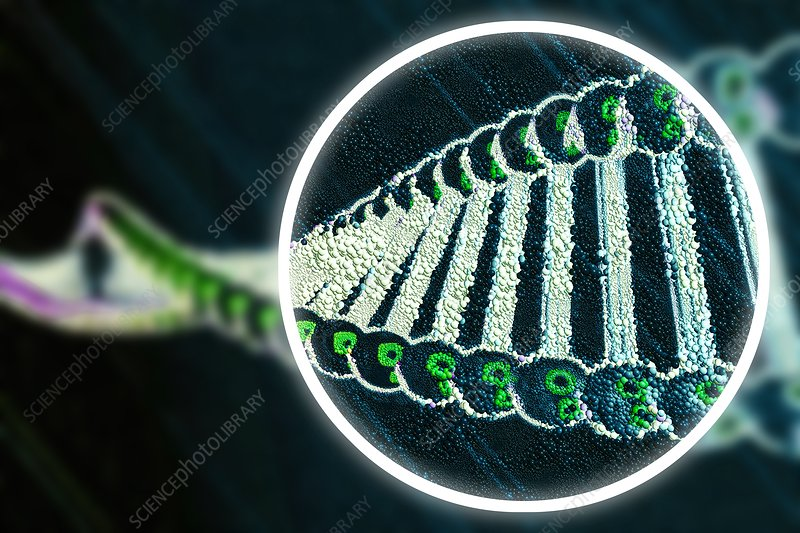 Gene editing, conceptual illustration