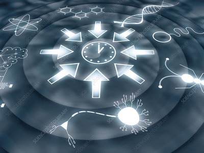 Convergent evolution, conceptual illustration