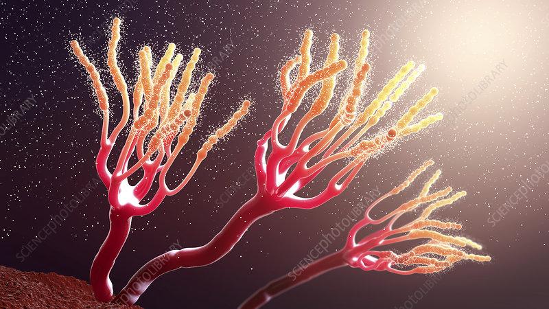 Fungus releasing spores, illustration