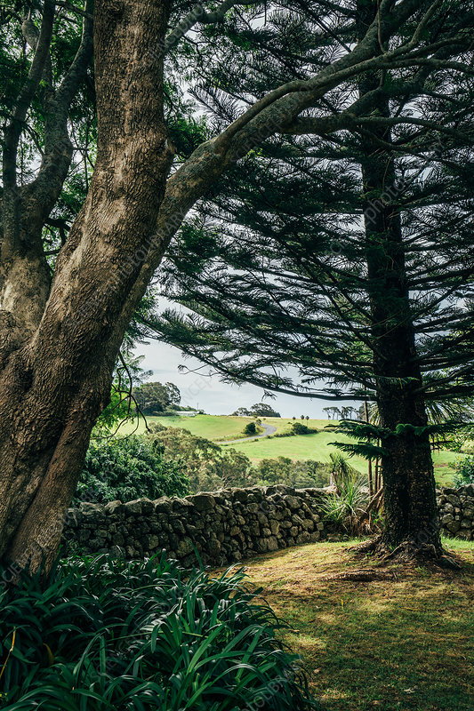 Trees and idyllic green landscape Kiama Australia