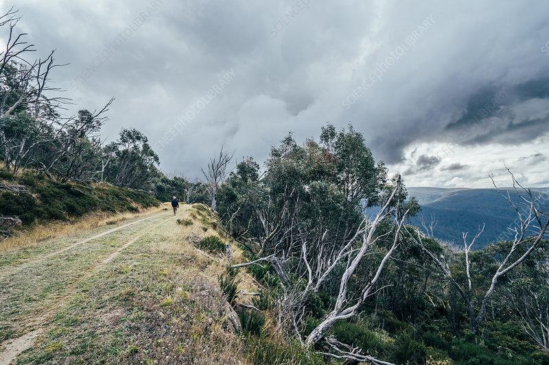 Man walking along trees mountain ridge