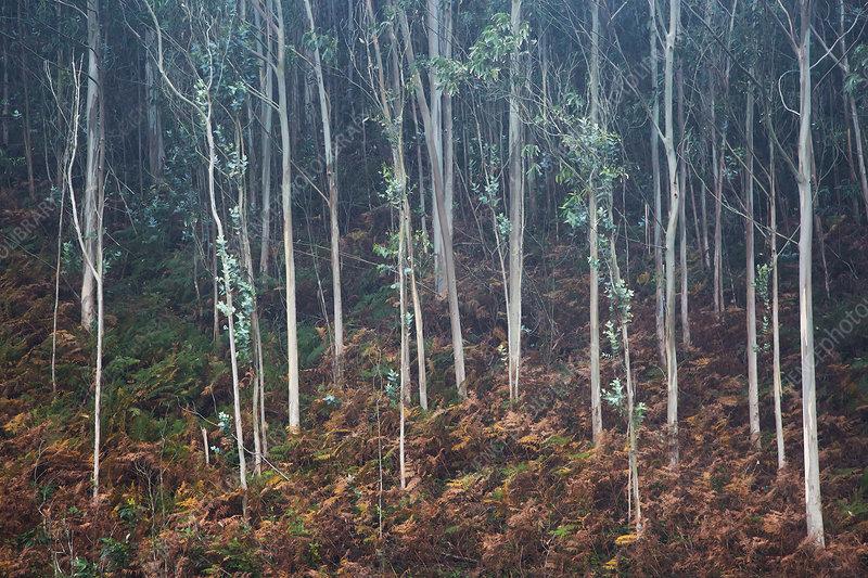 Leaves growing on sapling trees in woods