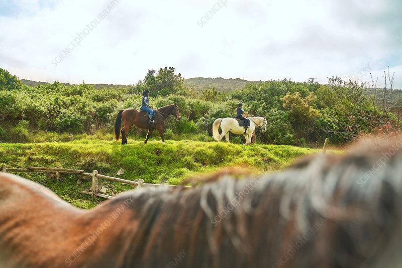 Girls horseback riding on sunny grass ridge