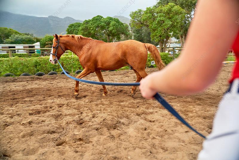 Horse training in rural dirt paddock