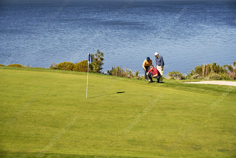Male golfers planning putt shot