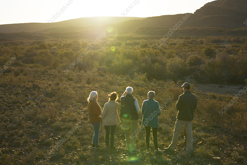 Group watching elephants in sunny grassland South Africa