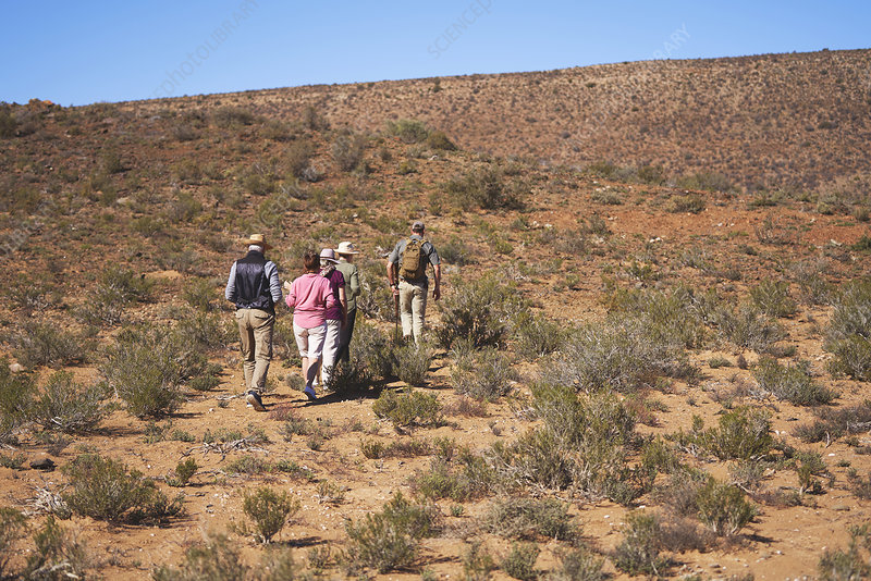 Guide leading group along sunny grassland South Africa