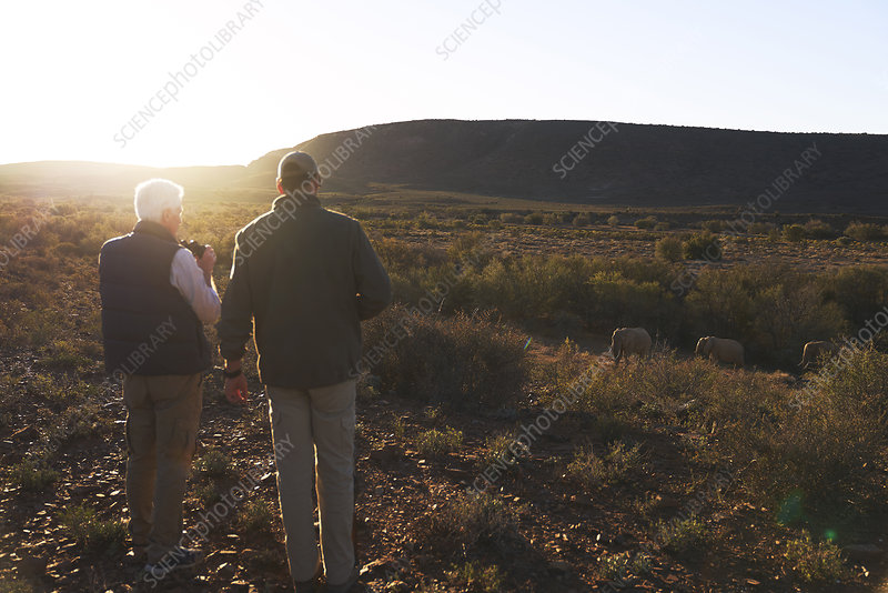 Men on safari watching elephants in sunny grassland
