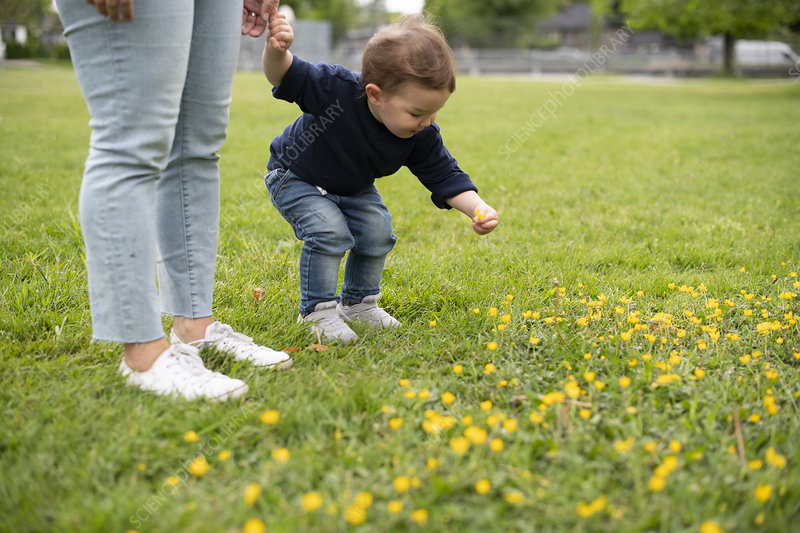 Cute innocent toddler girl picking flowers grass