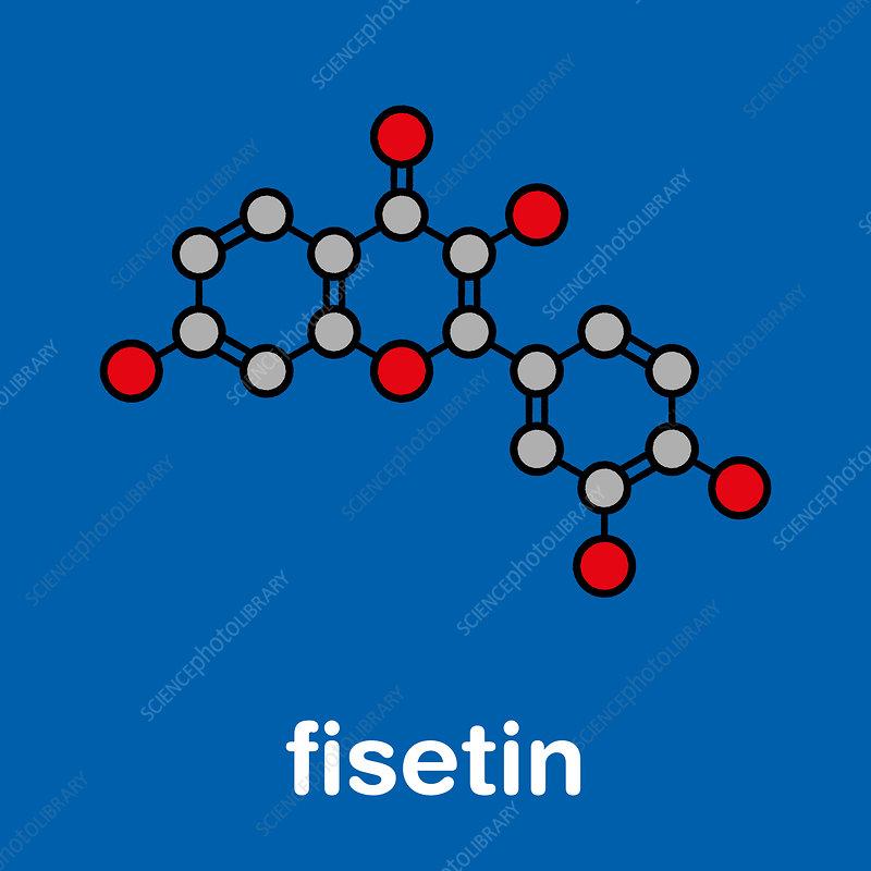 Fisetin plant polyphenol molecule, illustration