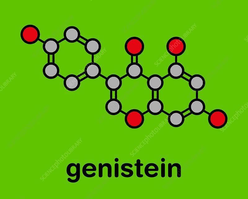 Genistein isoflavone molecule, illustration
